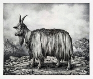 Sverre Malling - Norwegian Mountain Goat